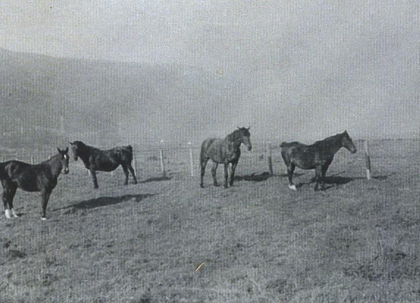 Horses on Rhu Mhor