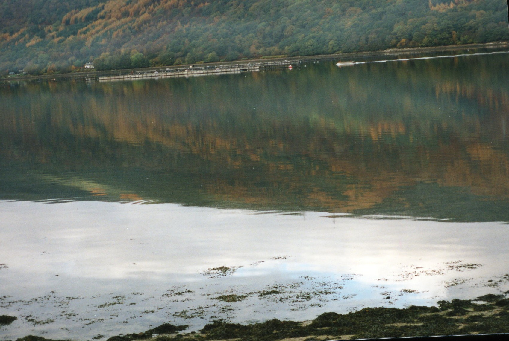 Cages on Loch Fyne