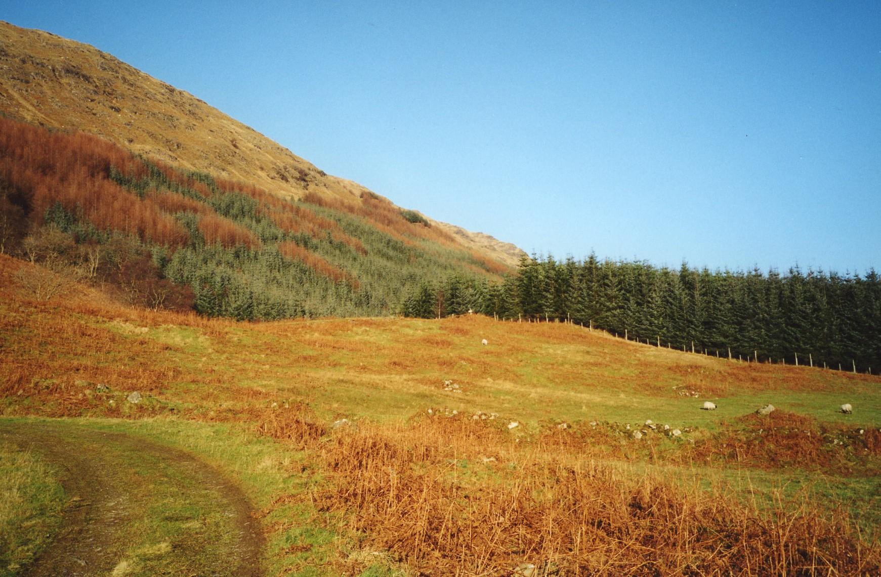 Forestry Glen Fyne