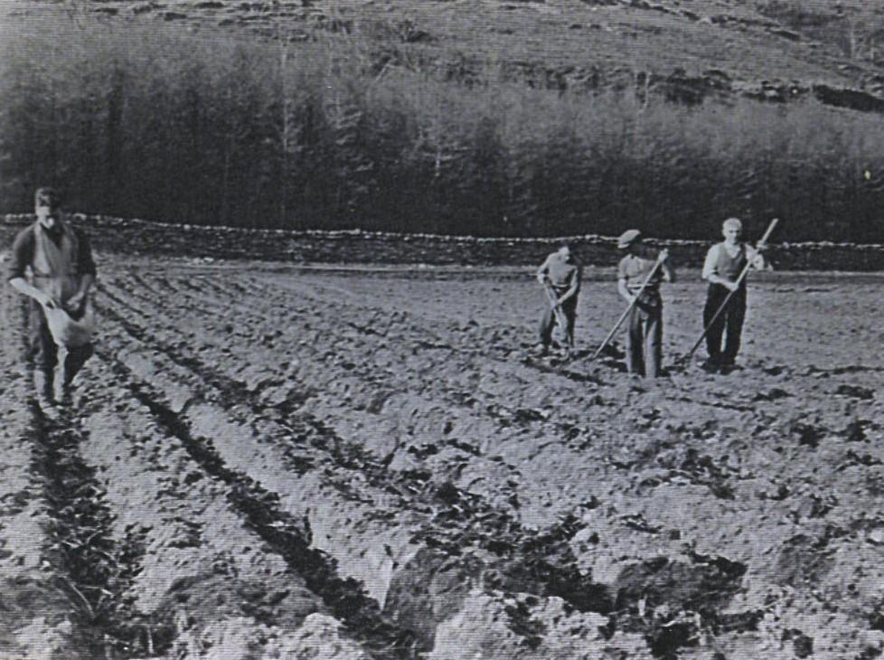 Planting Potatoes at Clachan