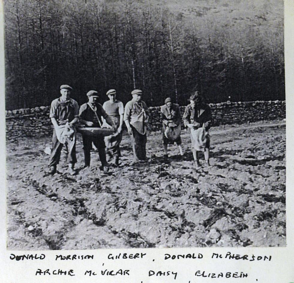 Lifting Potatoes at Clachan