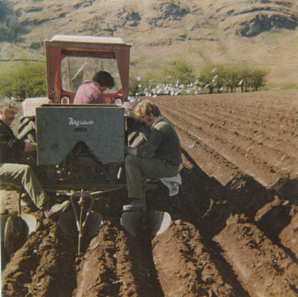 Ploughing at Achadunan