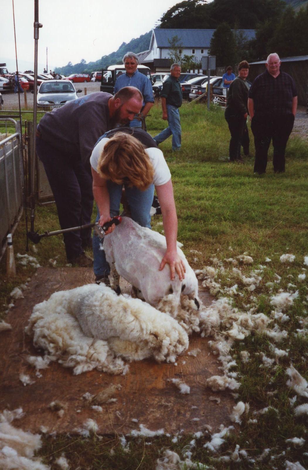 Sheep Sale