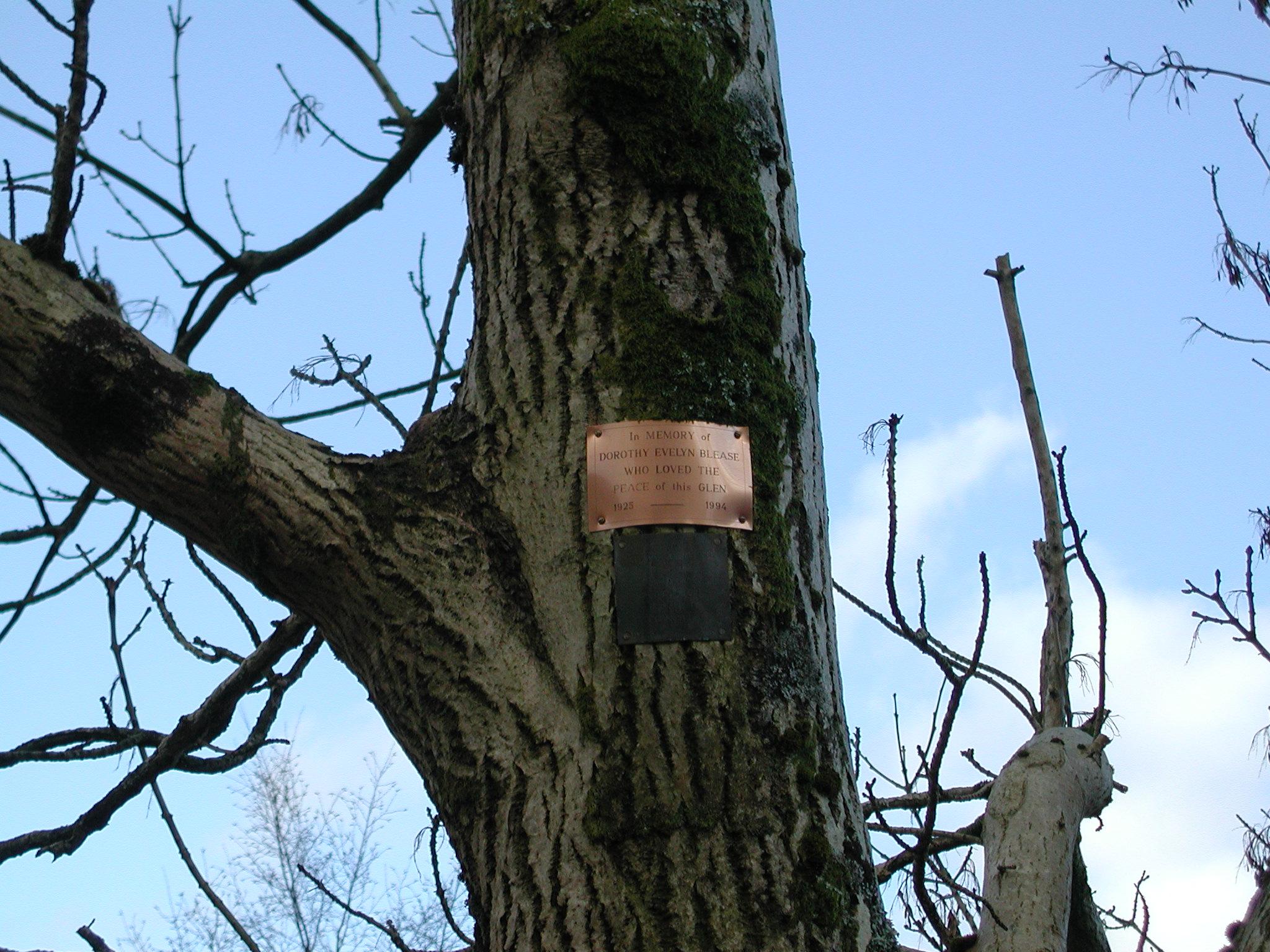 Memorial plack on tree at Inverchorachan fank