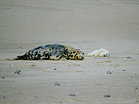 Seal & Pup