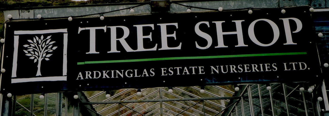 The Tree Shop