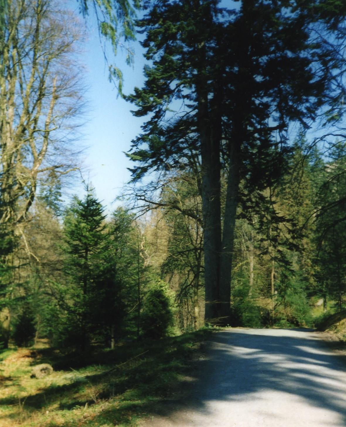 The Three Sisters (Fir Tree)