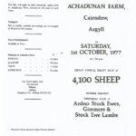 Shepherding on Ardkinglas Estate - Achadunan - Sheep sale